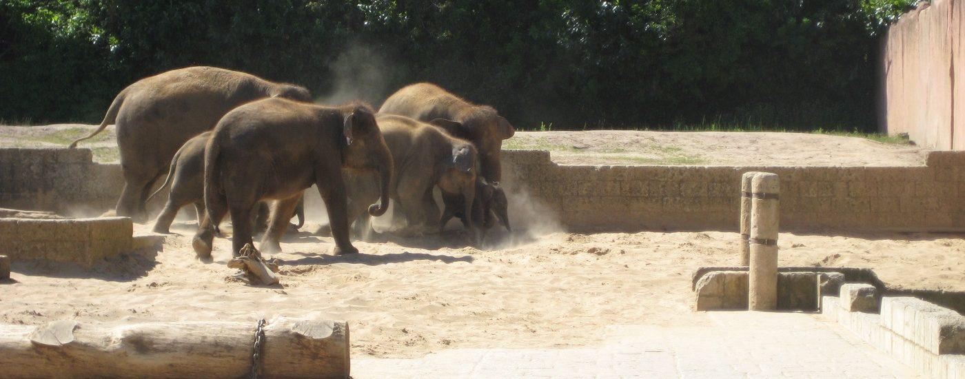 Auf dem Bild ist eine Elefantenherde