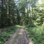 Ein Waldweg zu Leerlauf im Kopf, ein Achtsamkeitstraining mit dem IDOGO Stab im Wald.