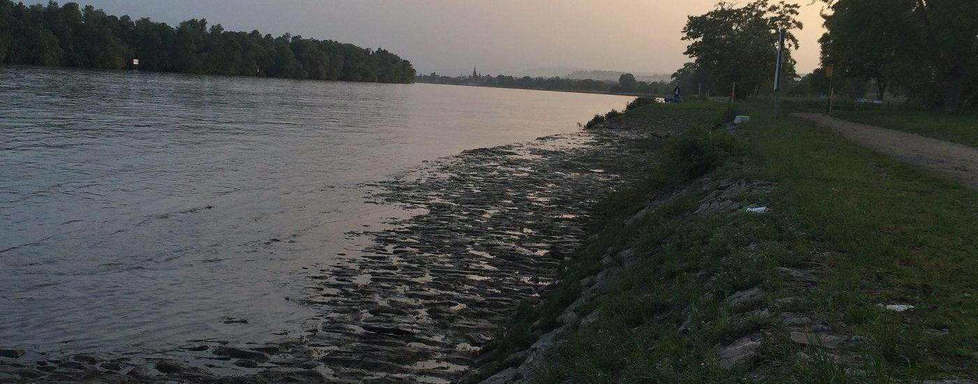 Rheinufer bei Hattenheim