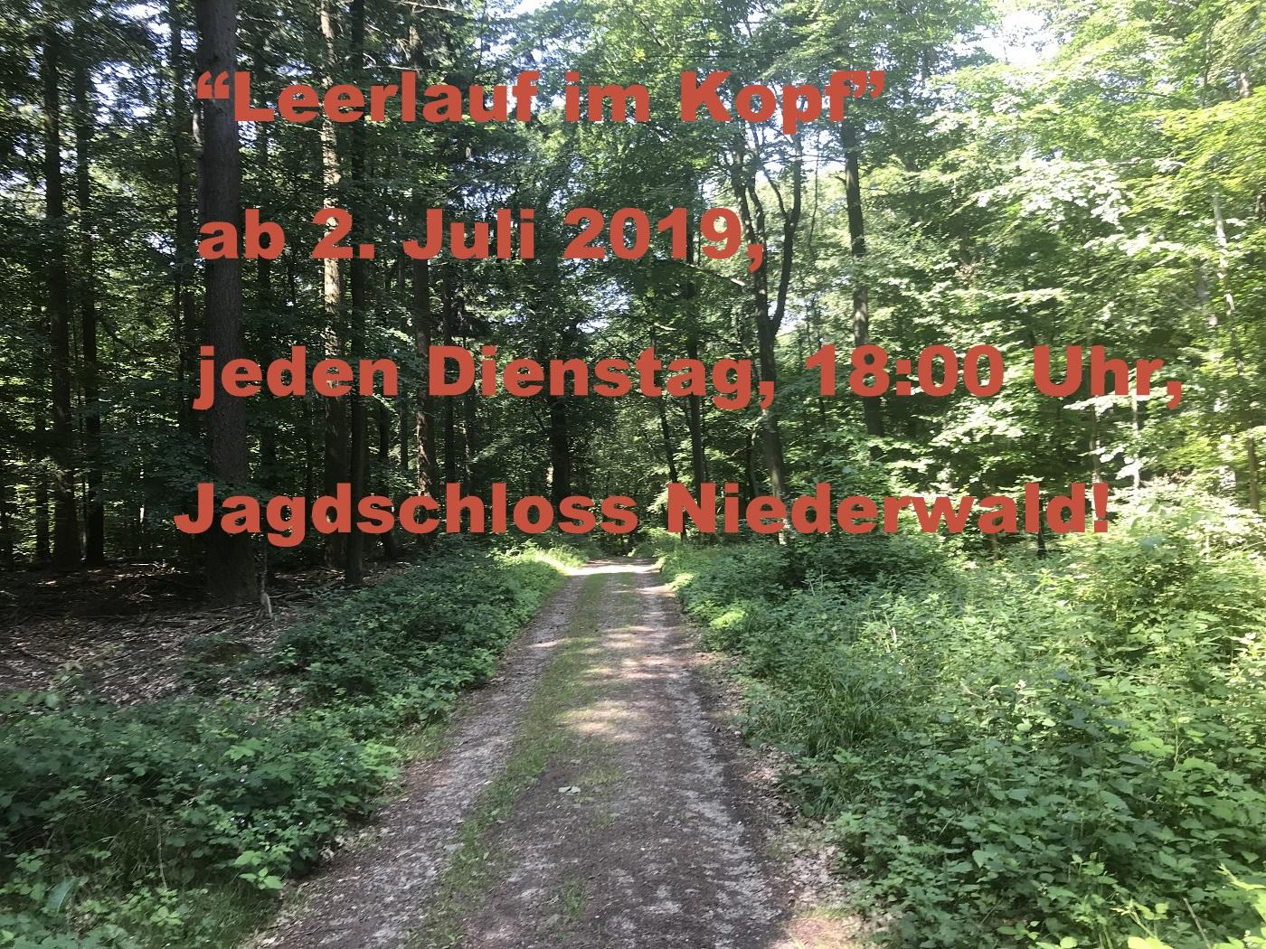 Auf dem Bild ist ein Waldweg zu sehen. Achtsamkeitstraining im Wald, Jagdschloss Niederwald, Rüdesheim. Outdoortraining mit dem Idogo Stab.