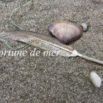 Auf dem Bild sieht man eine Feder und eine Muschel im Sand. Auf dem Bild steht fortune de mer.