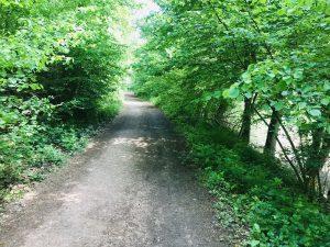 Wald in Rüdesheim, am Jagdschloss Niederwald, Leerlauf im Kopf, Achtsamkeitswalk im Wald