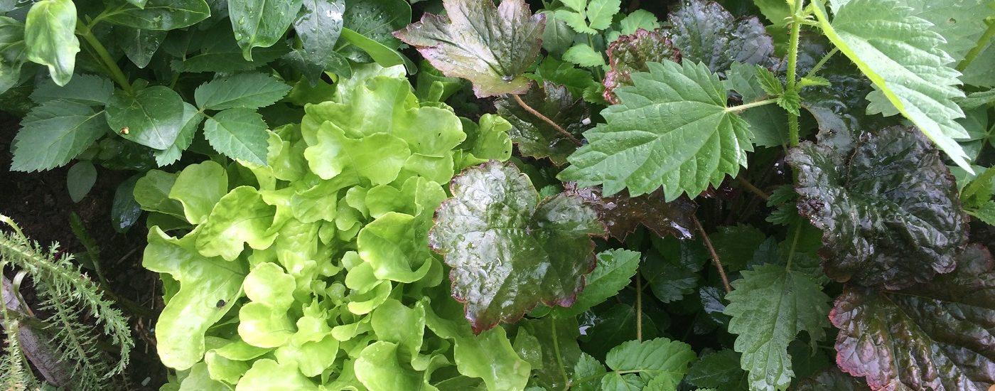 Frisches Gemüse, Salat, Nahrung fürs Gehirn.