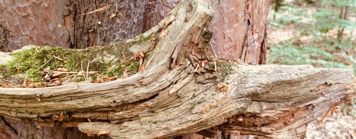 Leerlauf im Kopf, Waldbaden im Rüdesheimer Wald