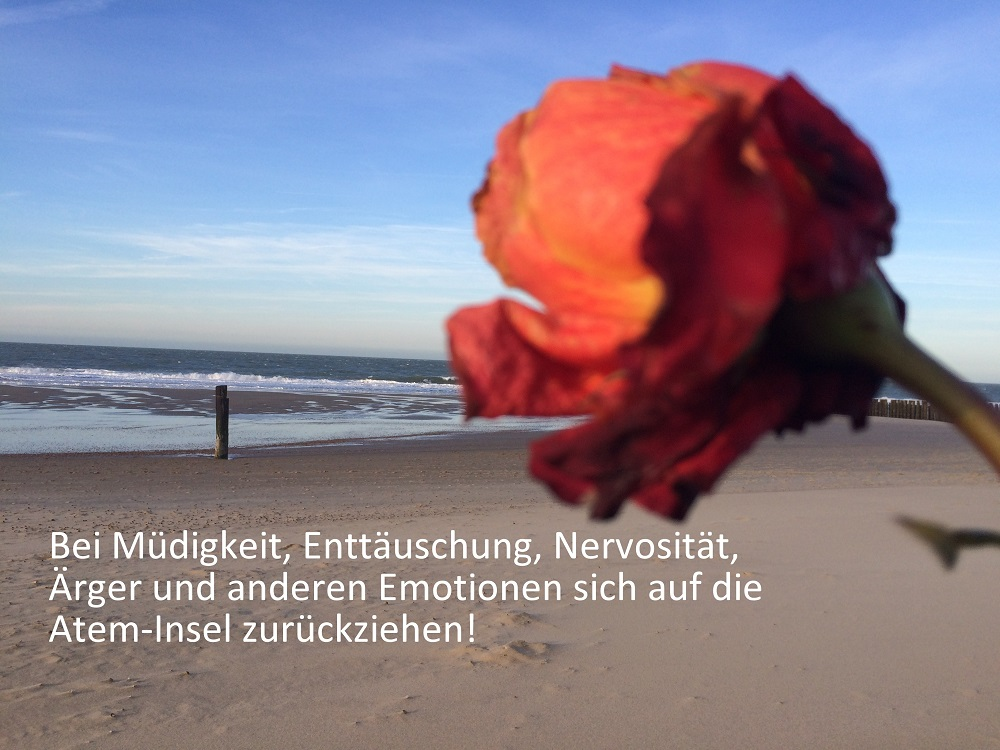 Rose am Meer im Sand