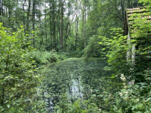 Waldteich im Schächerbachtal, Homberg-Ohm